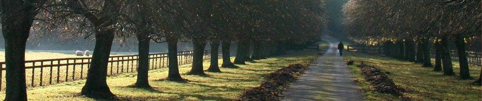 Alfalfa for Sale, Rape Seed Oil, Grass Producers Lincolnshir UK